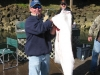 Nice 78lb Halibut Caught off Newport Oregon with Yaquina Bay Charters